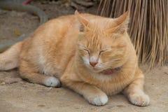 Imbirowy kot zdjęcie royalty free