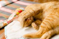 Imbirowy kot chce spać Obrazy Stock
