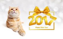 Imbirowy kot i szczęśliwy nowego roku 2017 tekst z tasiemkowym łękiem Fotografia Royalty Free