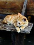 Imbirowy kot kłaść na drewnianym schodku obrazy stock
