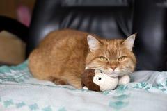 Imbirowy kot kłama na zabawkarskiej małpie obraz royalty free
