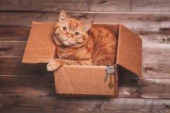 Imbirowy kot kłama w pudełku na drewnianym tle w nowym mieszkaniu Puszysty zwierzę domowe robi spać tam nowe klucze do domu Zdjęcia Stock