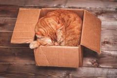 Imbirowy kot kłama w pudełku na drewnianym tle w nowym mieszkaniu Puszysty zwierzę domowe robi spać tam nowe klucze do domu Fotografia Stock