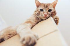 Imbirowy kot na drzwi w domu fotografia royalty free