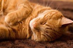 Imbirowy kot na dywaniku Zdjęcia Royalty Free