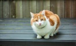 Imbirowy kot na Składowym pudełku obrazy stock