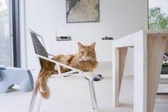 Imbirowy kot przy nowożytnym domem Obrazy Stock