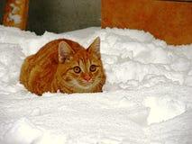 Imbirowy kot w śniegu Zdjęcia Royalty Free