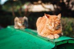 Imbirowy kota dosypianie na wierzchołku zielona chałupa zdjęcia stock