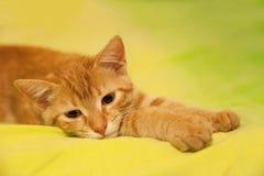 Imbirowy Włosiany kot na łóżku obraz stock