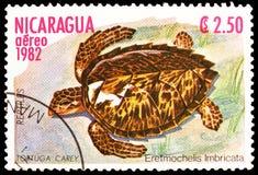Imbricata Eretmochelys χελωνών Hawksbill, ερπετά serie, circa 1982 στοκ εικόνα