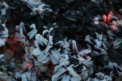 Imege de la Navidad y del Año Nuevo postal Forest Fir Cones en el fuego Fotografía de archivo