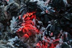 Imege de la Navidad y del Año Nuevo postal Forest Fir Cones en el fuego Imágenes de archivo libres de regalías