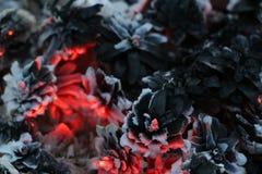 Imege de la Navidad y del Año Nuevo postal Forest Fir Cones en el fuego Imagen de archivo