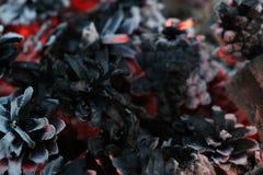 Imege de la Navidad y del Año Nuevo postal Forest Fir Cones en el fuego Foto de archivo