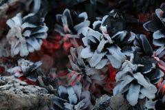 Imege de la Navidad y del Año Nuevo postal Forest Fir Cones en el fuego Fotos de archivo