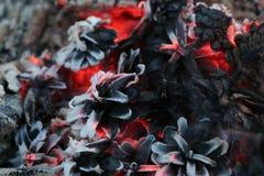 Imege del nuovo anno e di Natale cartolina Forest Fir Cones su fuoco Fotografia Stock