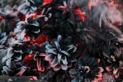 Imege del nuovo anno e di Natale cartolina Forest Fir Cones su fuoco immagini stock libere da diritti