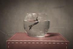Imersão em uma bacia dos peixes imagem de stock royalty free