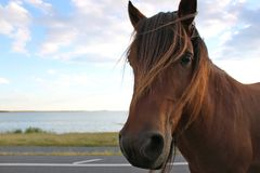 IMG_1344. Beautiful wild horse standing on the road next to an ocean bay Stock Photography