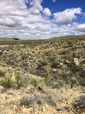 IMG_0392 Dezerterują teren z roślinami w Tucson, Arizona ©2019 Paul światło fotografia stock