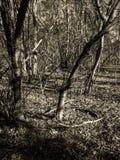 IMG_9689 drzewa z cieniami w obszarze zalesionym w Nowa Anglia zdjęcie royalty free