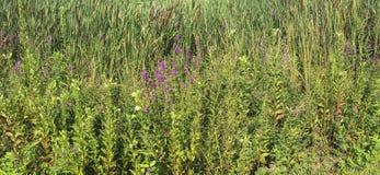 IMG_5198 Wielkich łąk rezerwat dzikiej przyrody ©2018 Paul Krajowy światło obrazy royalty free