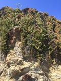 IMG_8488 winogrady i kwiaty na skały szkła plaży - Ft Bragg, CA zdjęcia royalty free