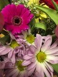 IMG_7068 zbli?enie Kolorowy kwiatu bukiet fotografia royalty free