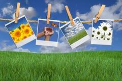 Imágenes polaroid de la flor que cuelgan en una cuerda Fotografía de archivo libre de regalías
