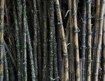Imię pisać na bambusowych drzewach zdjęcia stock