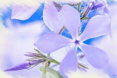 Imitación de la imagen asomando el polemonio azul salvaje, o polemonio del arbolado, o Guillermo dulce salvaje stock de ilustración