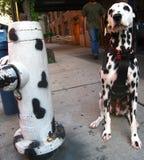 Imitation. Dalmatian dog next to matching fire hydrant Royalty Free Stock Photo