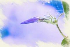 Imitation de l'image apparaissant indistinctement le phlox bleu sauvage, ou phlox de région boisée, ou William doux sauvage illustration de vecteur