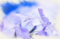 Imitation de l'image apparaissant indistinctement le phlox bleu sauvage, ou phlox de région boisée, ou William doux sauvage illustration libre de droits