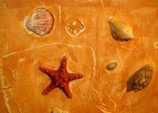 Imitation sand decorative filler and sea shells. Royalty Free Stock Photos