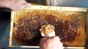 Imkeröffnungsbienenwaben mit Bienenmesser Ein Imker, der eine Messergabel verwendet, um das Wachs vom Rahmen zu schneiden stock video
