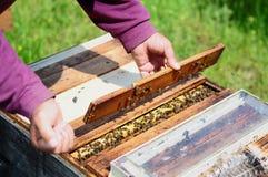 Imker öffnet den Bienenstock Stockbild