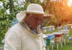 Imker arbeitet mit Bienen und Bienenstöcken auf dem Bienenhaus Stockfotografie