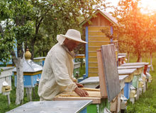 Imker arbeitet mit Bienen und Bienenstöcken auf dem Bienenhaus Lizenzfreies Stockbild
