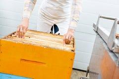 Imker Arranging Honeycomb Frames in der Kiste stockfoto