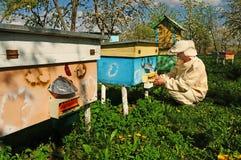 Imker auf Bienenhaus Lizenzfreie Stockbilder
