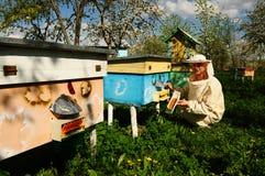 Imker auf Bienenhaus Lizenzfreies Stockbild