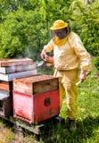 Imker bei der Arbeit mit Bienen stockfoto