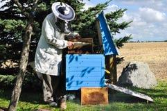 Imker bereitet Erntehonig vom Bienenstock zu Stockbilder