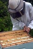 Imker, der Bienenstock überprüft Lizenzfreies Stockfoto