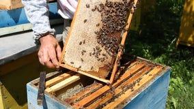 Imker, der an Bienenstock arbeitet stock video footage