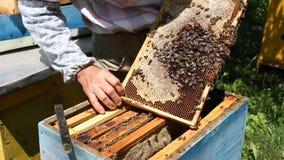 Imker, der an Bienenstock arbeitet stock footage