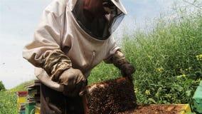 Imker, der an Bienenstock nahe bei einem grünen Feld arbeitet stock video