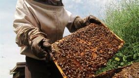 Imker, der an Bienenstock nahe bei einem grünen Feld arbeitet stock footage